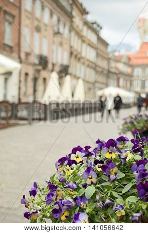Pansies against a de-focused background in a street of Nowe Miasto of Warsaw Poland