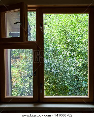 View From Cottage Window On Green Willow Tree