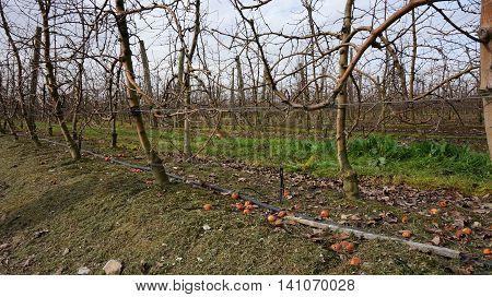 Landscape With Winter Vineyard