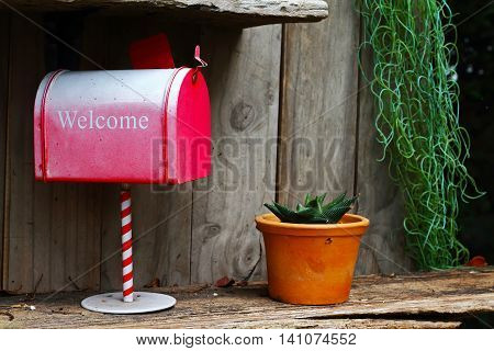 red mail box and Cactus on wood background .effect vintage style blur and noise