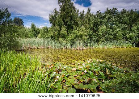 Local Lily Pond, in East Cramlington which is a nature reserve in Northumberland, providing free and easy access to nature