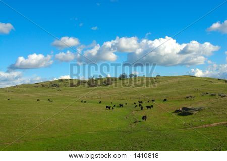 Cattle Ranch In California, Usa
