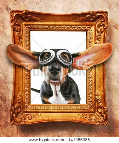 a vintage photo frame with a basset hound wearing goggles coming out of it with flapping ears