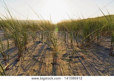 View through the grass in the dunes