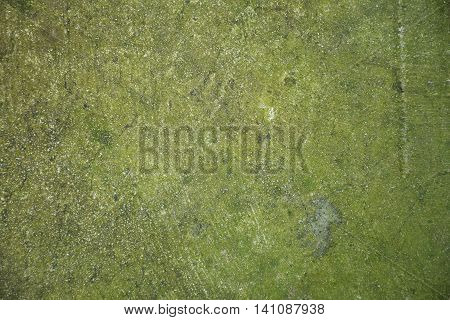 A Texture/background of old lichen concrete and cement.