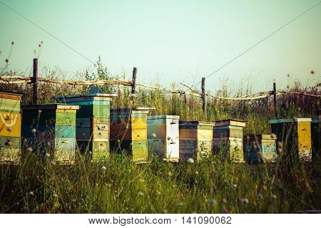 Apiary bee colony honey farm on green grass background