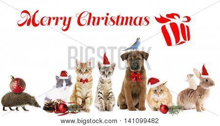 Funny christmas pets. Merry Christmas