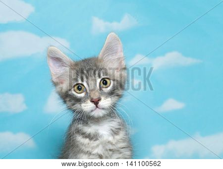 Portrait of a eight week old gray and white fluffy tabby kitten looking at viewer blue sky background with clouds. Copy space
