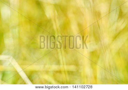 Abstract nature bokeh background - blur colorful bokeh. Nature blurred bokeh background from plant.