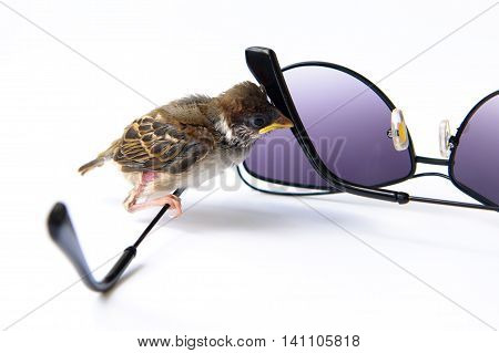 Surprised nestling sparrow sits on the sunglasses on a white background