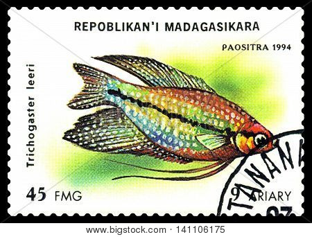 STAVROPOL RUSSIA - July 31 2016: a stamp printed by Malagasy Republic shows the fishes with the inscription Trichogaster leeri series circa 1994
