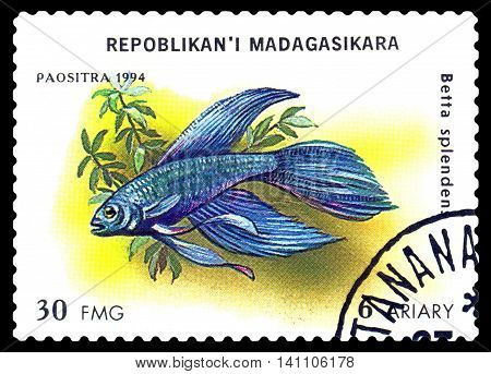 STAVROPOL RUSSIA - July 31 2016: a stamp printed by Malagasy Republic shows the fishes with the inscription Betta splendens series circa 1994