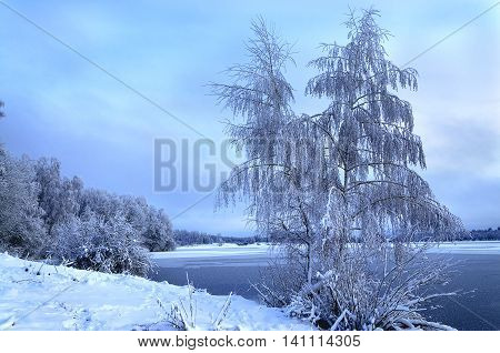Winter landscape with trees covered with hoarfrost and views on the frozen lake