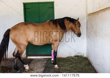 Horse With Bandaged On Injured Leg