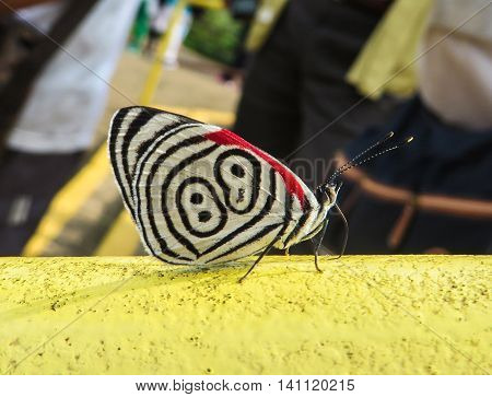 Close-up of a butterfly on a handrail with people in the background