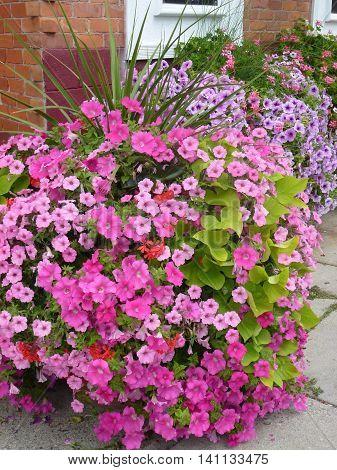 Canada, August 1, 2016, Stratford,ON, Beautiful flowers arrangement