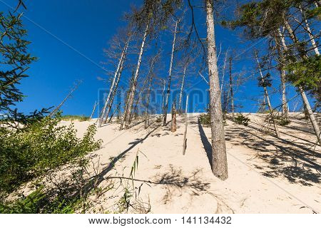 The moving dunes in the Slowinski National Park Poland. The dunes are regarded as a curiosity of nature on a European scale.