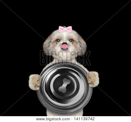 Cute dog wants to eat and hold a bowl -- isolated on black