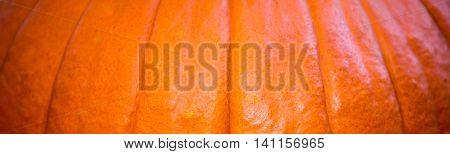 A macro, panoramic photo of an orange pumpkin