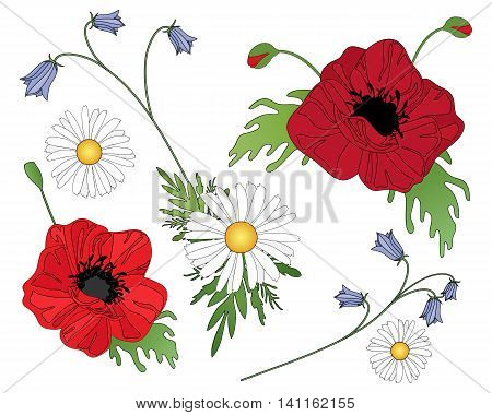 an illustration of wildflowers including poppies harebells and daisies arranged on a white background