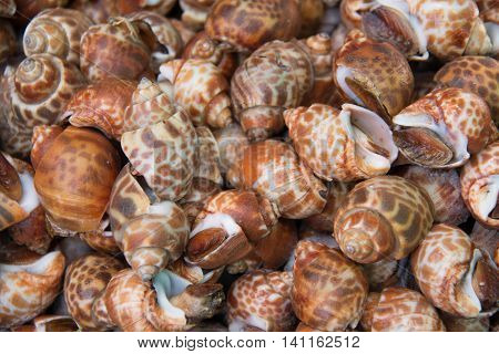 A delicious pattern of Shellfish snails background