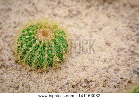 Cactus small trees occur on land in the fertile.