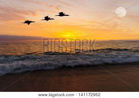 Birds silhouettes flying is three birds flying against a vidid orange sunset sky as the full moon rises over the ocean horizon. .