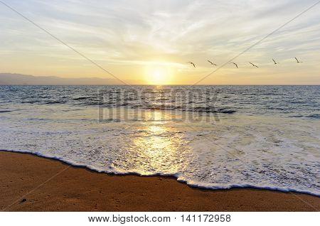 Birds flying ocean sunset is a flock of birds flying toward the bright peaceful sun on the ocean horizon.