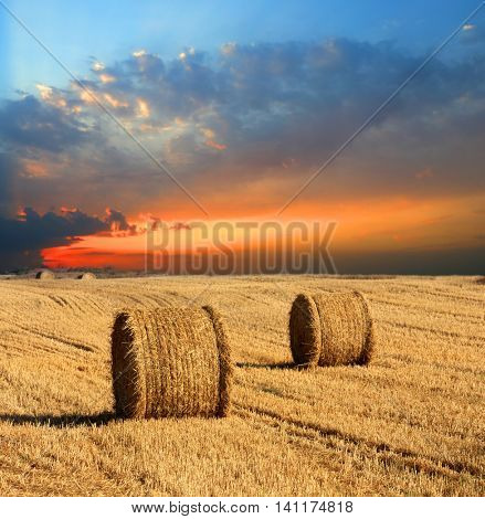 evening landscape with hay rolls on meadow
