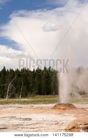 Pink Cone Geyser Erupting Yellowstone National Park Wyoming