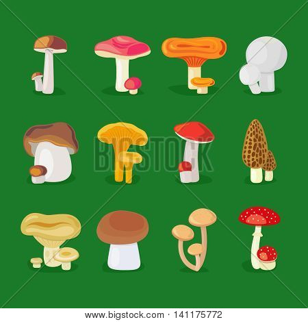 Isolated vector mushrooms. Edible fungus, mushrooms and toadstools illustration