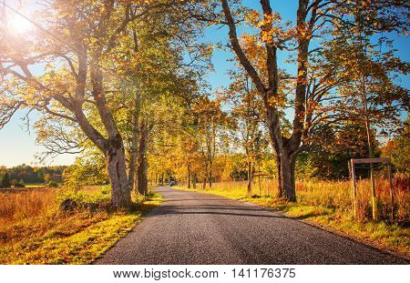 old asphalt road with beautiful trees on the sides in autumn