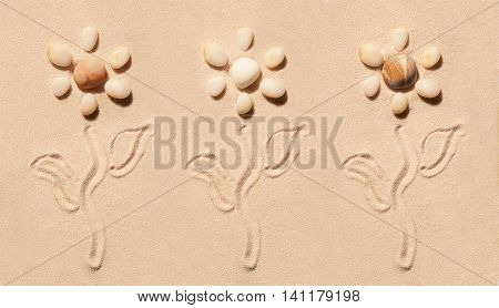 Flowers Of Sea Stones With Stems And Leaves On Sand