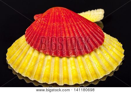 Red and yellow sea shells of mollusk isolated on black background close up
