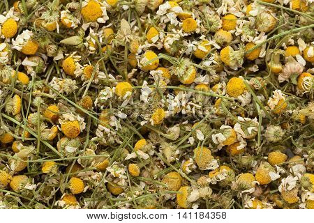 Organic German chamomile (Matricaria chamomilla) flowers. Macro close up background texture. Top view.