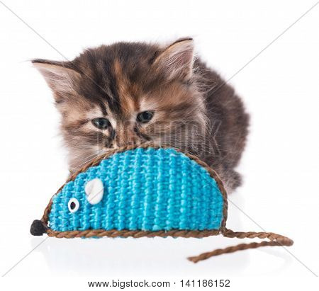 Cute siberian kitten with toy mouse isolated on white background. Focus on the kitten