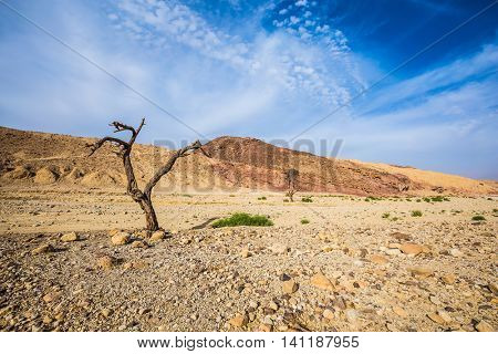 The route starts in the scenic Black Canyon. Stone desert near the seaside resort of Eilat. Fancifully curved dried tree