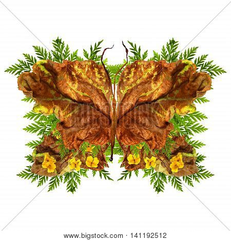 floral butterfly made of bizarre curved extruded dried lily petals. yellow celandine pressed flowers and dried up a huge crumpled brown with golden and green-veined leaves of poplar