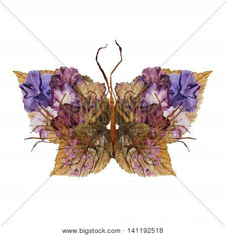 floral butterfly made bizarre curved extruded dried lily petals pressed Petunia flower and dry brown leaves of raspberry