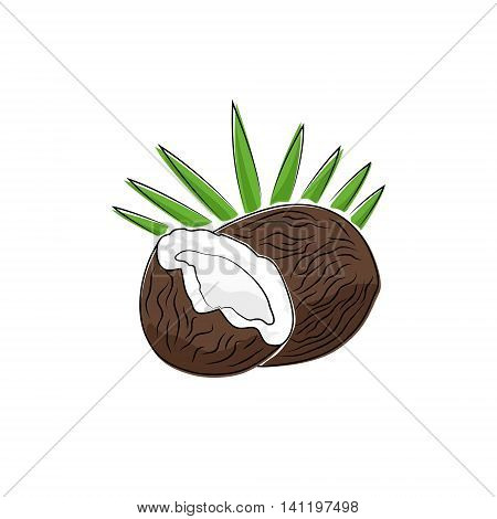 Coconut Isolated on White, Tropical Fruit Coconut, Vector Illustration