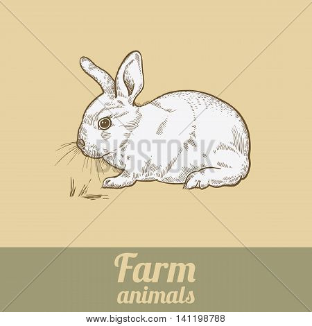 Farm animal rabbit. Bunny colored print. Style vintage engraving. Vector illustration of series - farm animals isolated. Template for packaging design farm products; signage natural food stores.