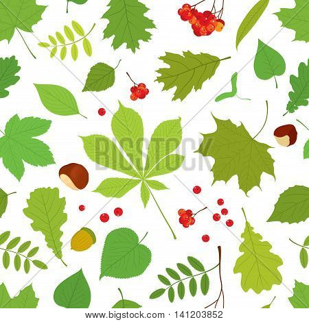 Seamless pattern of different tree leaves - oak, chestnut, birch, Rowan, linden, jasmine, lilac, maple, willow, poplar, sycamore, Rowan berry bunch, acorns, nuts on white background.