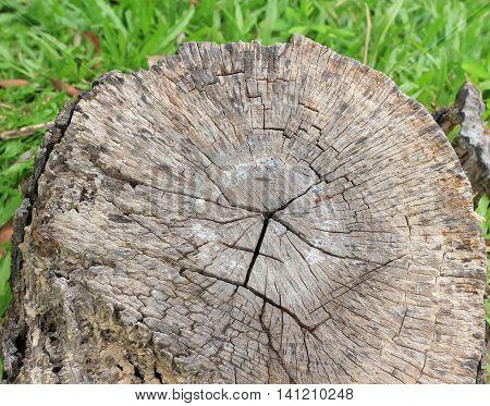 Tree stump on the green grass. Environmental problem concept