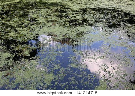 The Surface Of The Muddy Water
