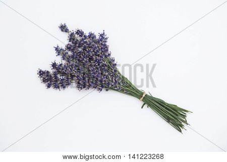 Bouquet of purple fresh fragrant lavender tied with white textile ribbon on white background