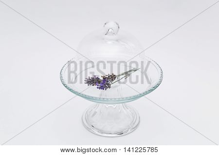 Twig of fresh purple fragrant lavender in transparent glass tray with cap on white background