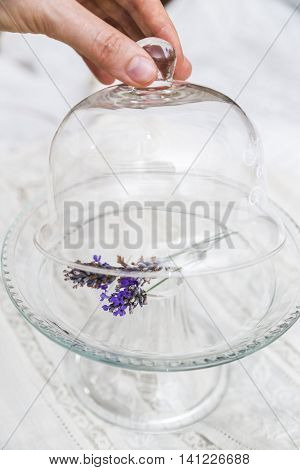 Female hand opens with fingers transparent glass cup of glass tray with twig of fresh purple fragrant lavender on white cloth textile background