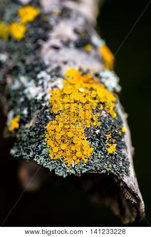 A close up of fungi