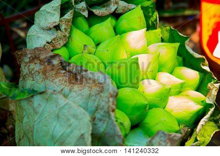 Beautiful closed green buds. Cambodia. Phnom Penh