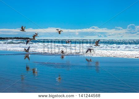 Seagulls flying over the waves of Garie Beach in a summer sunny day, Royal National Park coastline, New South Wales, Sydney, Australia.